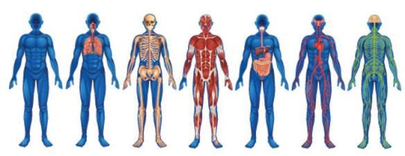 inflammationen