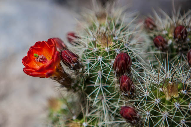 We had a great desert bloom in Arizona this year!