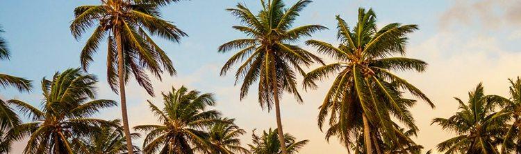 sundance-vacations-las-vegas-weddings-cili-weddings