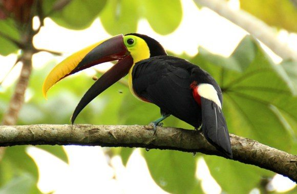 Sundance Vacations Destinations: Things to Do in Costa Rica