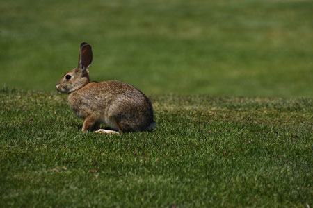view of The Rabbit who lives and multiplies in the garden