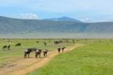 inside-the-ngorongoro-crater-tanzania