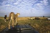 serengeti-and-ngorongoro-crater