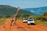 tsavo_east_nat15-1