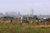 a-nairobi-national-park