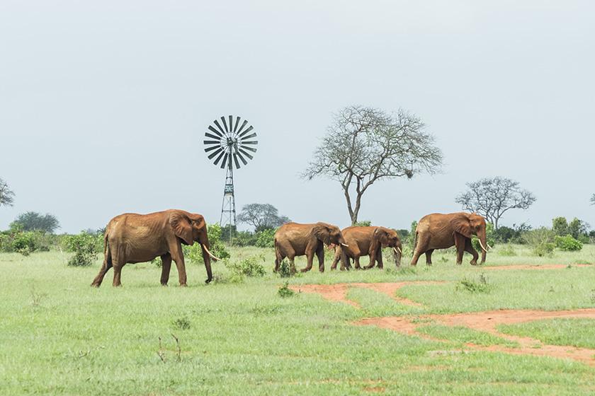 elephants-tsavo-east-sunday-best-mombasa-safaris