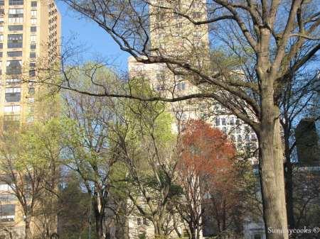 New York - prédios entre árvores
