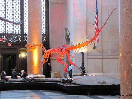 Museus em Nova York - Museu de História Natural - velociraptor