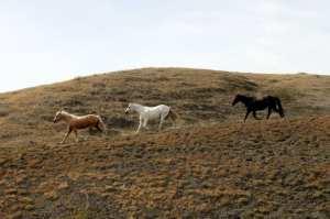La Reata Ranch - Família buscapé