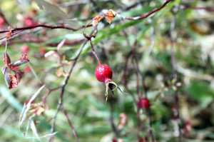 CanoeSki - arbustos