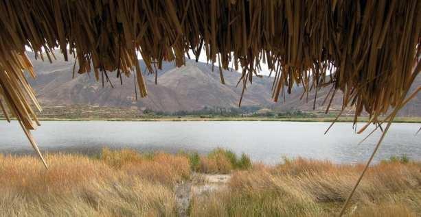 Valle Sagrado - Huaton - ponto de observação de aves