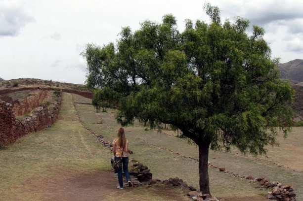Valle Sagrado - Pikillacta - Árvore, muros e nossa companhia de viagem :D