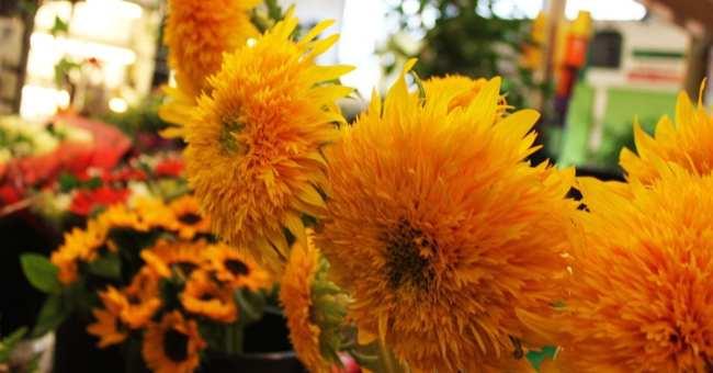 Mercados de Frankfurt - Kleinmarkthalle: Mais flores