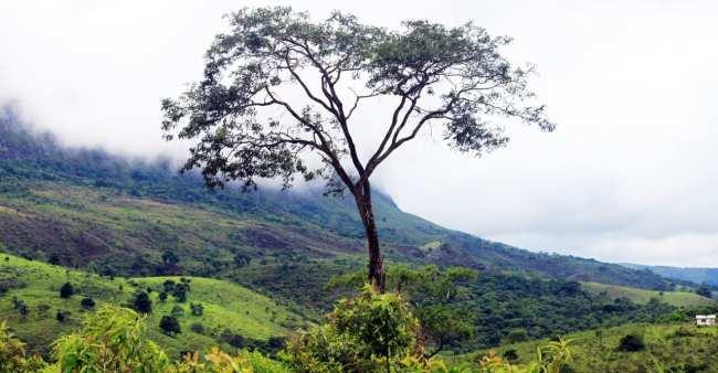 Serra da Canastra - Natureza