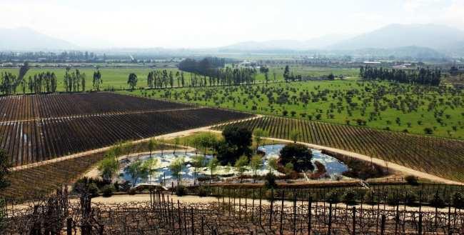 Vinícola Indómita Santiago - Onde são plantadas as uvas