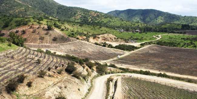 Vinícola Indómita Santiago - Onde são plantadas as uvas 3