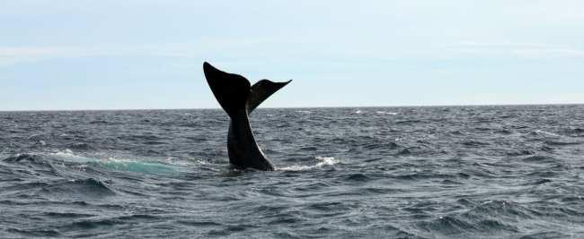 Provincia de Chubut - avistando baleias 2