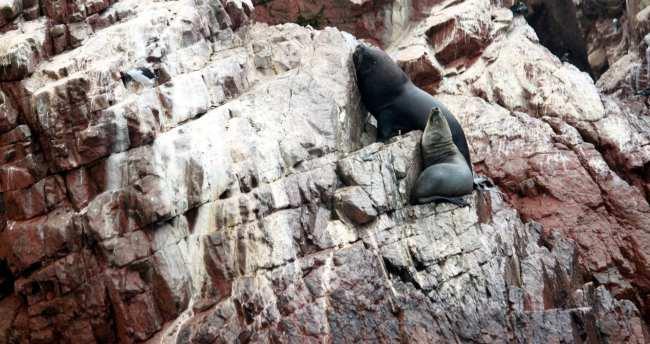 Peru: Ilhas Ballestas e Reserva Nacional de Paracas - 3