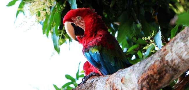 ABC do Pantanal - Arara