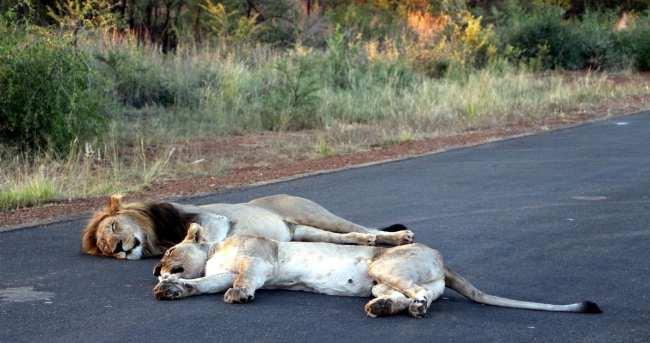 Como é fazer um safári na África do Sul - Madikwe Game Reserve 6