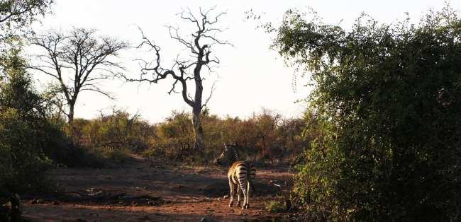 Como é fazer um safári na África do Sul - Madikwe Game Reserve 10