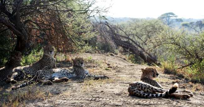 Como é fazer um safári na África do Sul - Madikwe Game Reserve 12