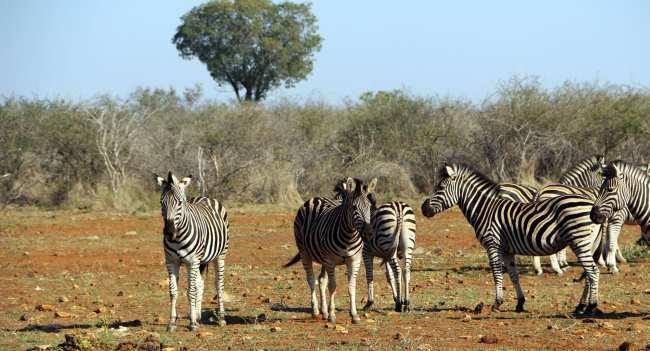 Como é fazer um safári na África do Sul - Madikwe Game Reserve 15