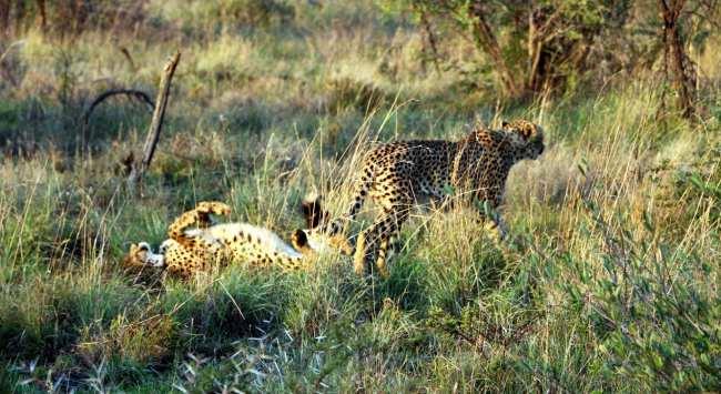 Como é fazer um safári na África do Sul - Madikwe Game Reserve 18