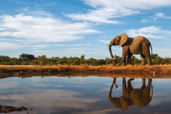 Elefante em Botsuana, por Shutterstock