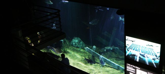 O que fazer em Chattanooga - Aquário do Tenessee 5