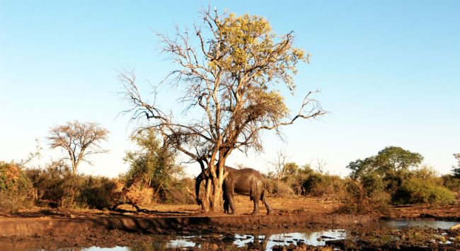 Fazer safari na África - elefante