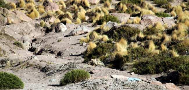 Passeios no Atacama - Gêiser de Tatio 15