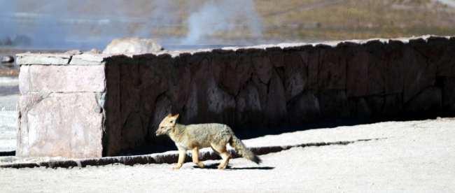 Passeios no Atacama - Gêiser de Tatio 20