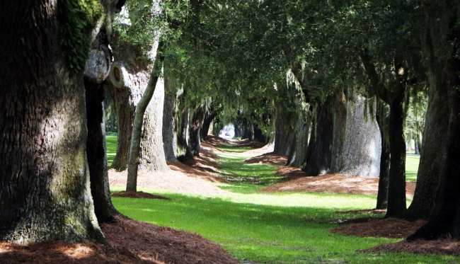 St Simons Island na Georgia Estados Unidos - Avenue of the Oaks