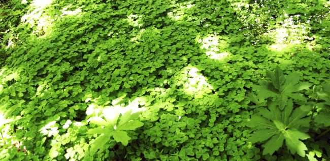 Roteiro por São Francisco - jardim botanico 3