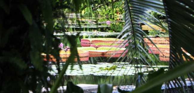 Roteiro por Naples, Everglades e Marco Island - 26
