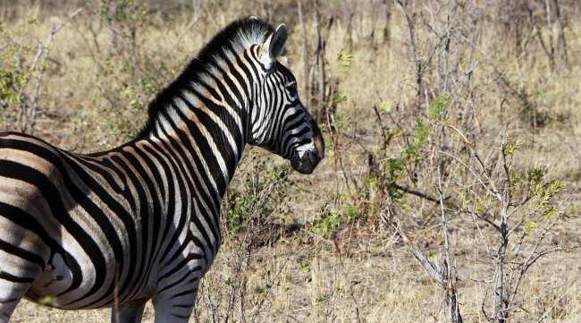 Kruger Park, safári pela África do Sul - 11