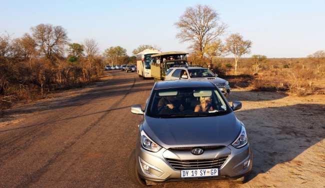 Kruger Park, safári pela África do Sul - 17