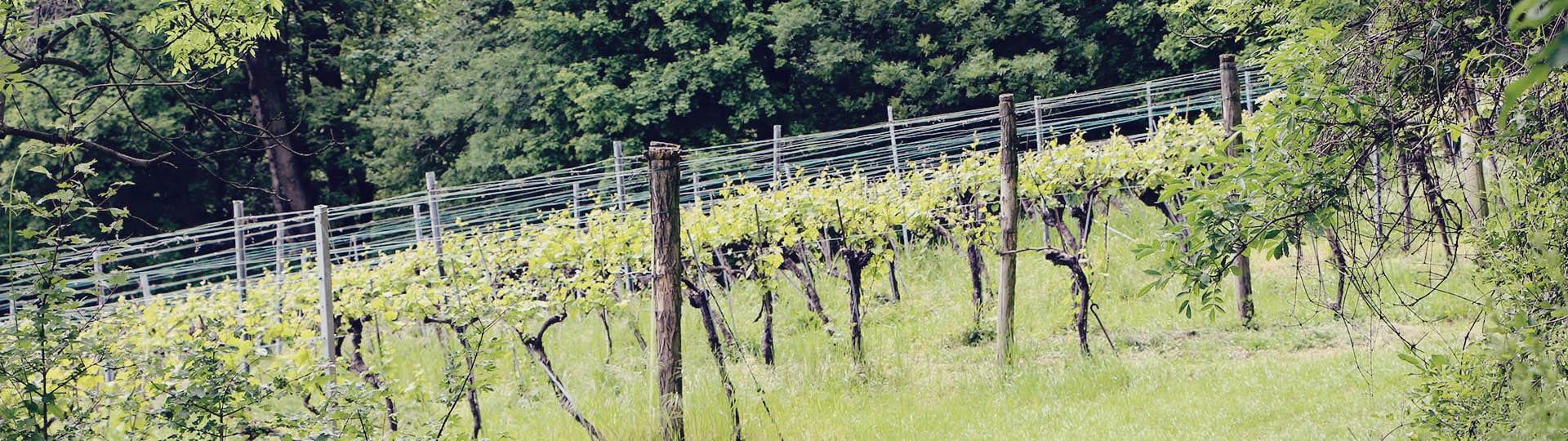 Viena e a tradição dos seus vinhos - maiores vinhedos urbanos da Europa - 05