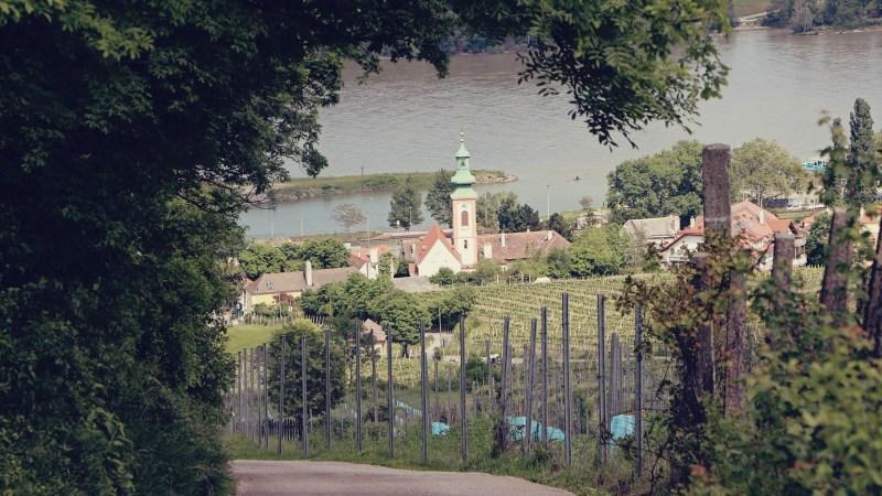 Viena e a tradição dos seus vinhos - maiores vinhedos urbanos da Europa - 11