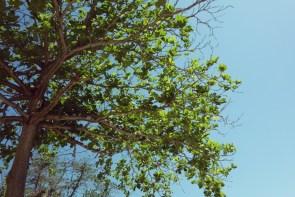 Paqueta est une île très boisée