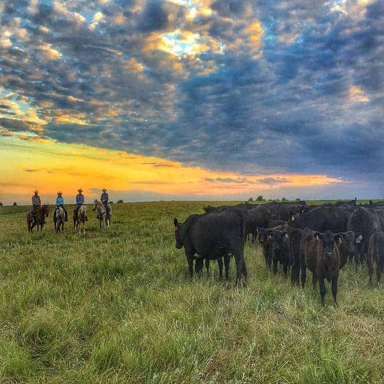 Sunset over the ranch with cowboys and cattle.
