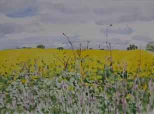 Danny Markey, Yellow fields