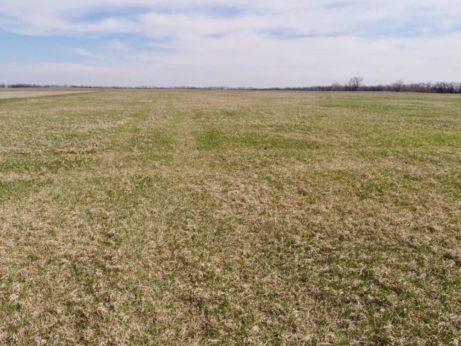 40+- Acres North of Walton KS