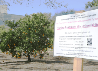 photo shows sign outside csun orange grove