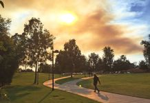 walkway with trees and grass and smoke overhead