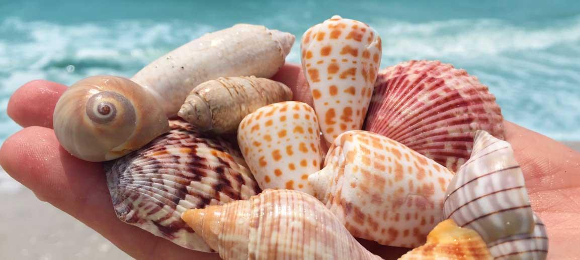 Dont Forget National Seashell Day  Sundial Beach Resort