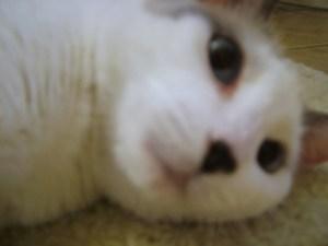 TA Bookshelf - Bonus Cat