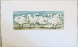 Valerie Christmas Limited Edition Etching of Swans
