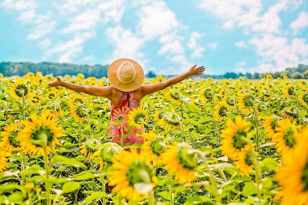 sunflower field markham girl photographer gta